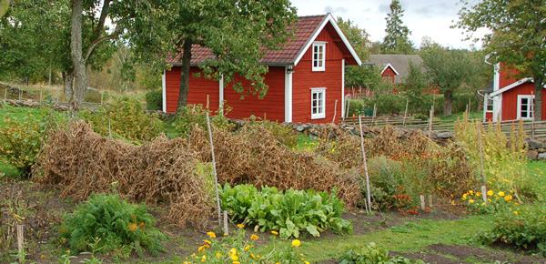 Fröodling på Åsens by. Foto: Agneta Börjeson.